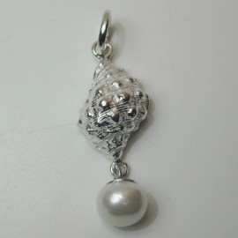 Caracol marino con perla